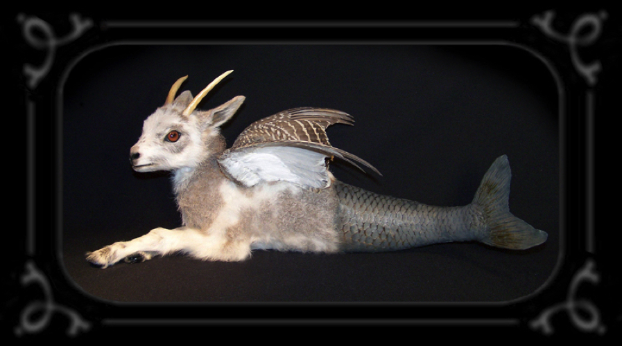 history of rogue taxidermy